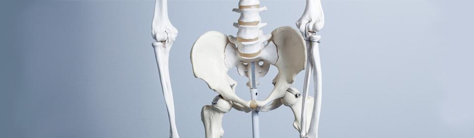 股関節‐2